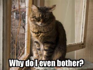 WhyDoIEvenBother Cat