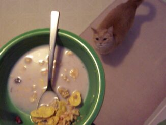 cereal-milk-spoiled-rotten-cats