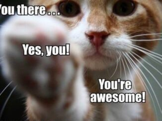 you-are-awesome-cat-kitty-face-pointing-at-you